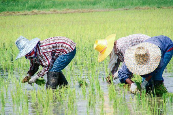farmer2F46EBF4-4B7B-1C2D-BF04-05460DCDF4C6.jpg